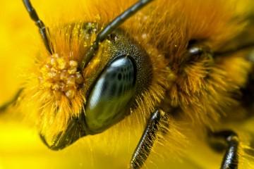 BIGBROTHER0_lesbelleshistoires.info_beehivebits.co.uk