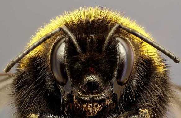 les bourdons des abeilles pas comme les notres 4 me partie les belles histoires de l 39 oncle. Black Bedroom Furniture Sets. Home Design Ideas