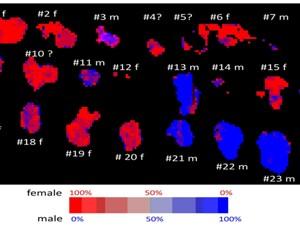 Différence en contenu d'ADN mesurée par spectroscopie