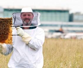 Airport Bienen