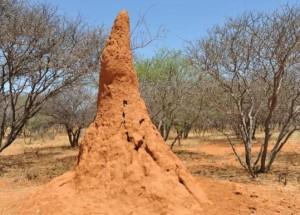Termitière en Namibie